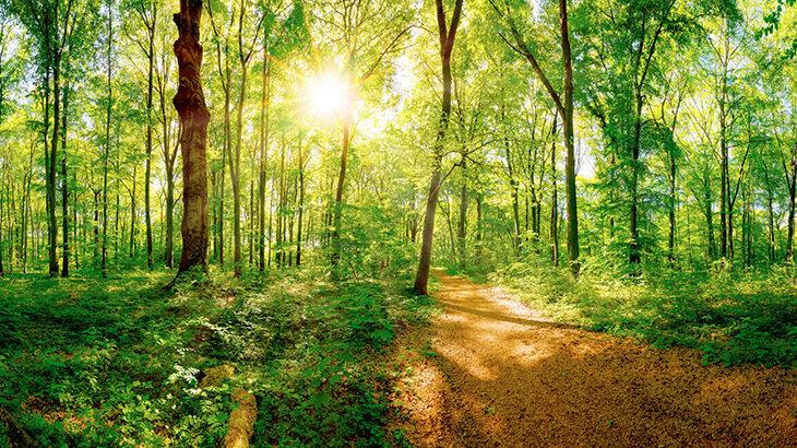 ストレスを和らげる森林浴の効果とやり方