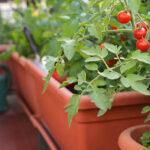 ベランダ菜園を楽しむ方法〜育て方が簡単な野菜も紹介!